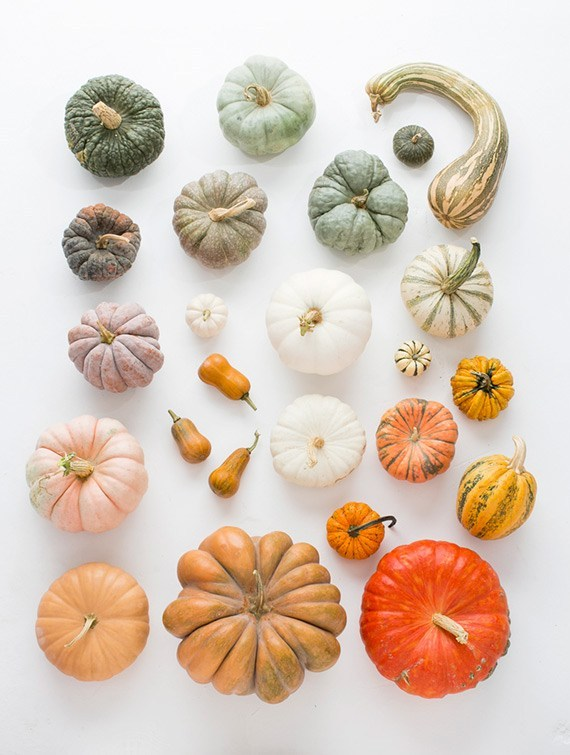 fall heirloom pumpkins